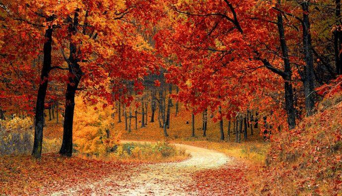 Sposób na jesień
